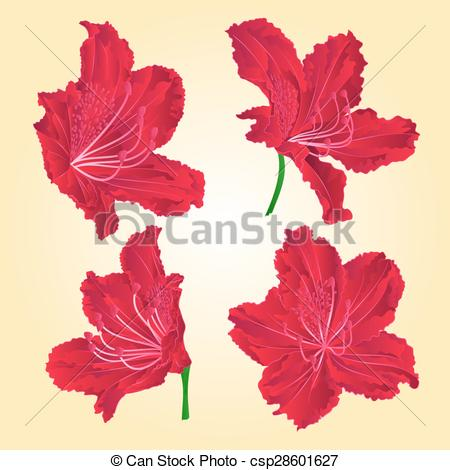 Vector Illustration of Red rhododendrons vector.eps.