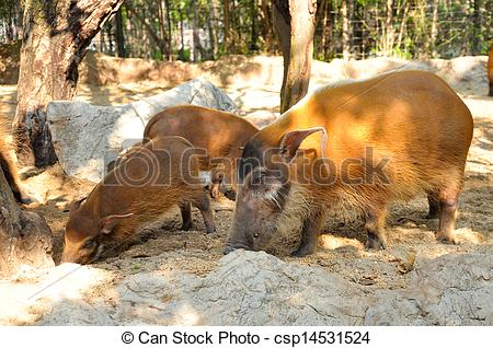 Clip Art of Red river hogs will live in a variety of habitats as.