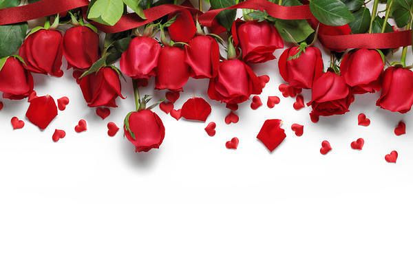 Red Roses White Background in 2019.