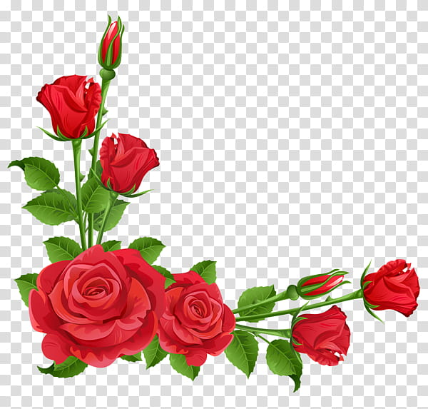 Roses, red rose illustration transparent background PNG.