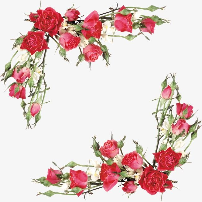Rose, Flowers, Red Flower PNG Transparent Clipart Image and.