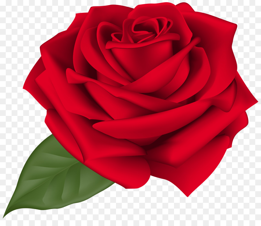 Rose Flower Clip art.