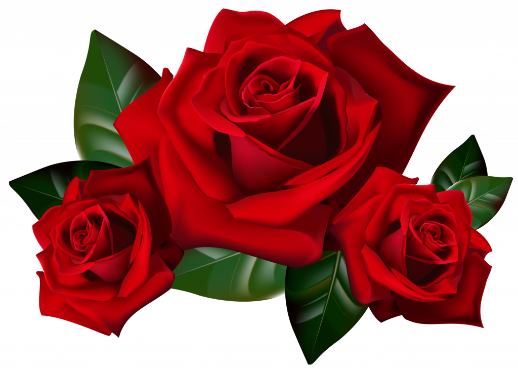 Top 25 Pictures Of Red Roses.