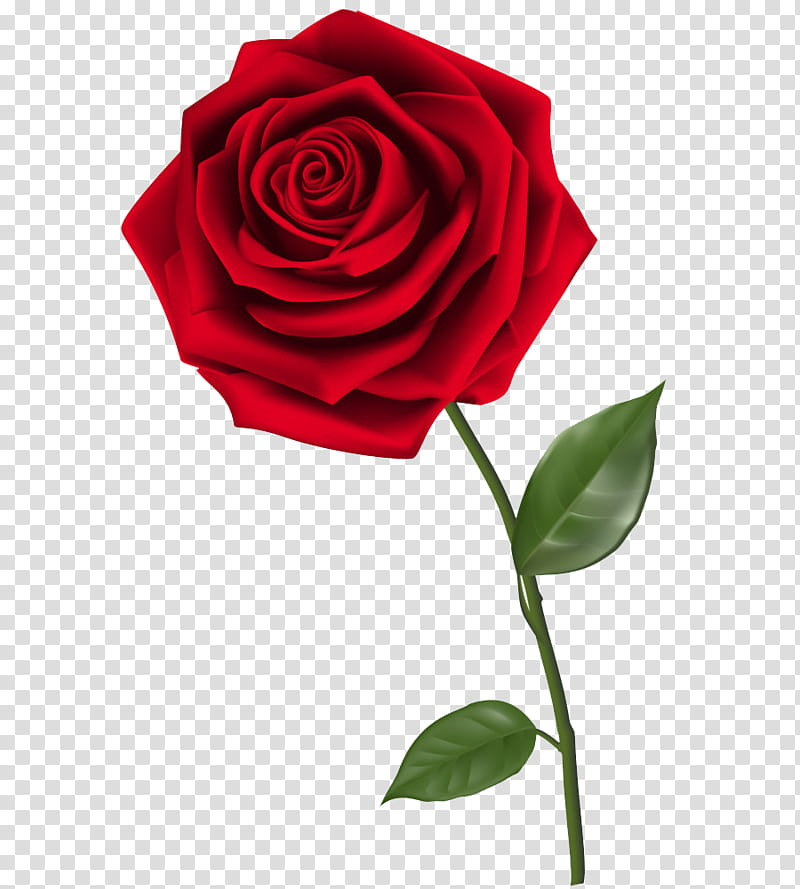 ROSES , red rose illustration transparent background PNG.