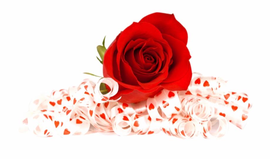 Free Red Rose Png Image.