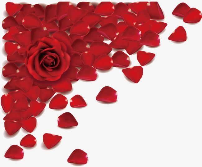 Rose Petal, Rose, Petal, Valentine\'s Day PNG and Vector with.