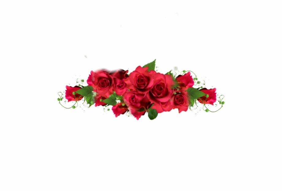 Rose Roses Border Redroses Red Redaesthetic Romantic Garden.