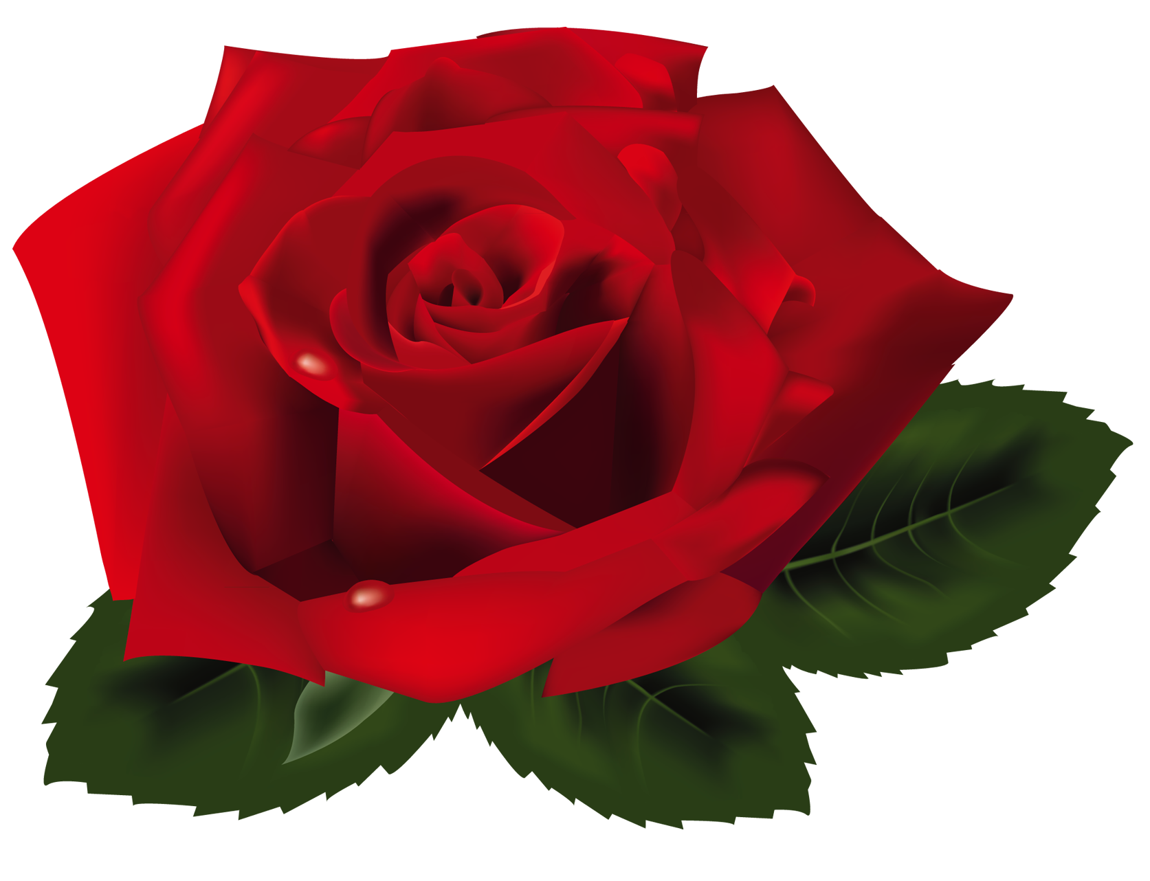 Red Rose Clip Art.