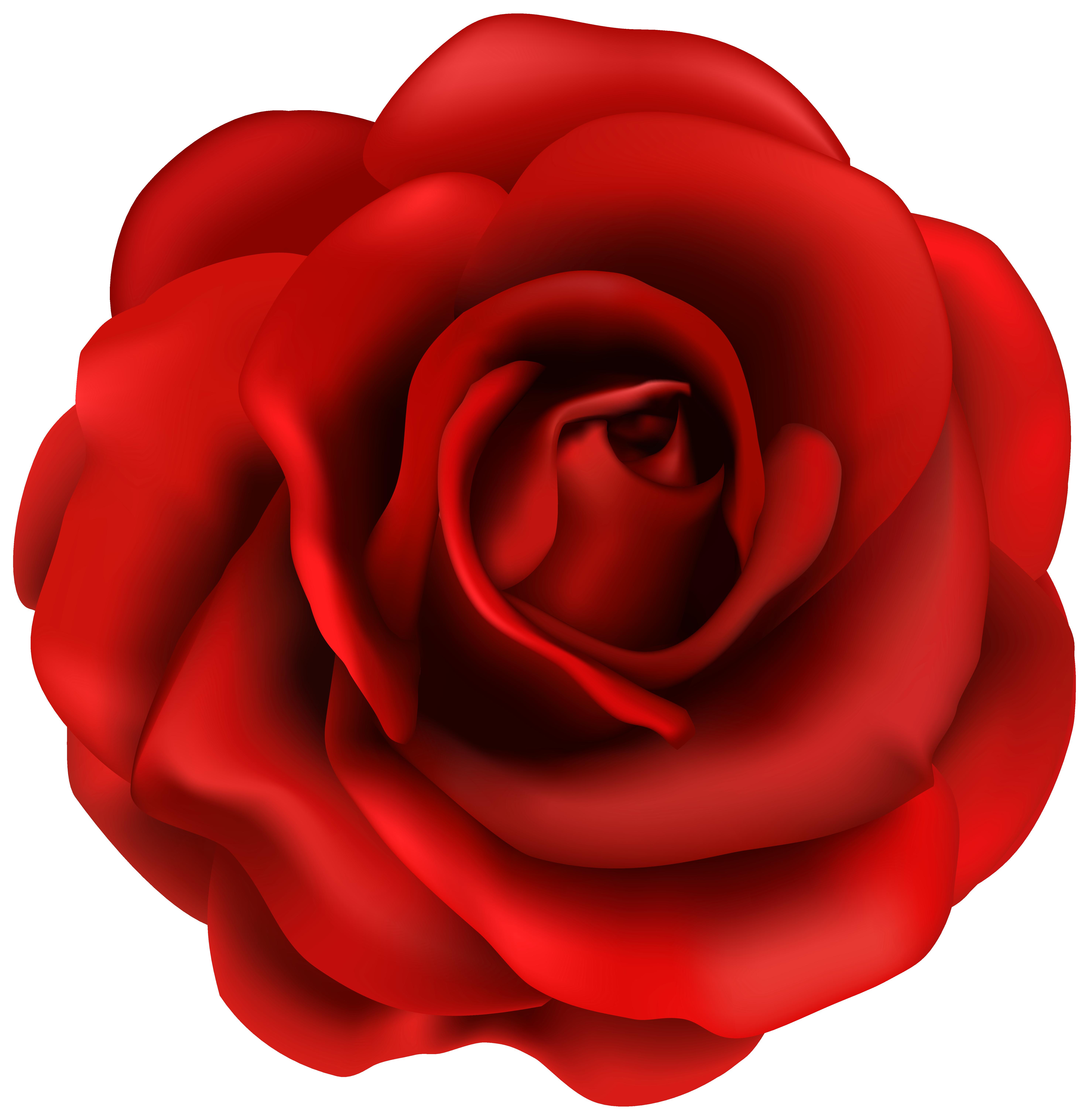 Rose Flower Clip art.