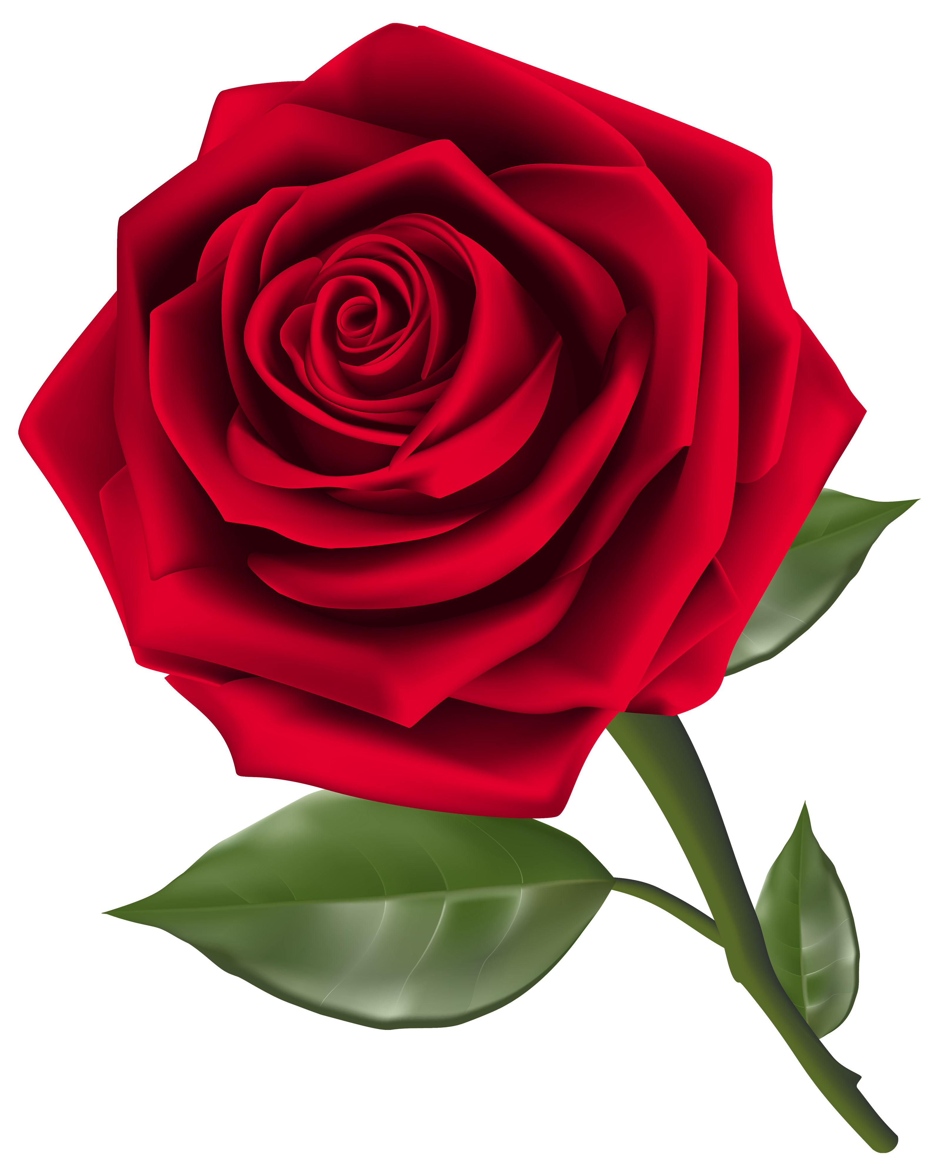 Beautiful Red Rose PNG Clipart.