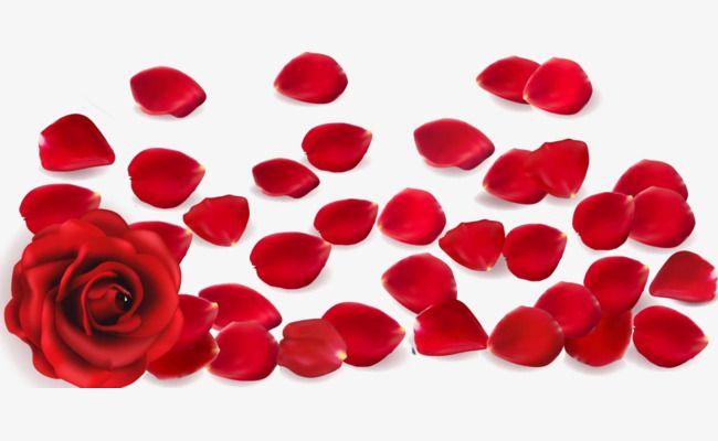 Petal, Pink Petals, Red Petals PNG Transparent Clipart Image.