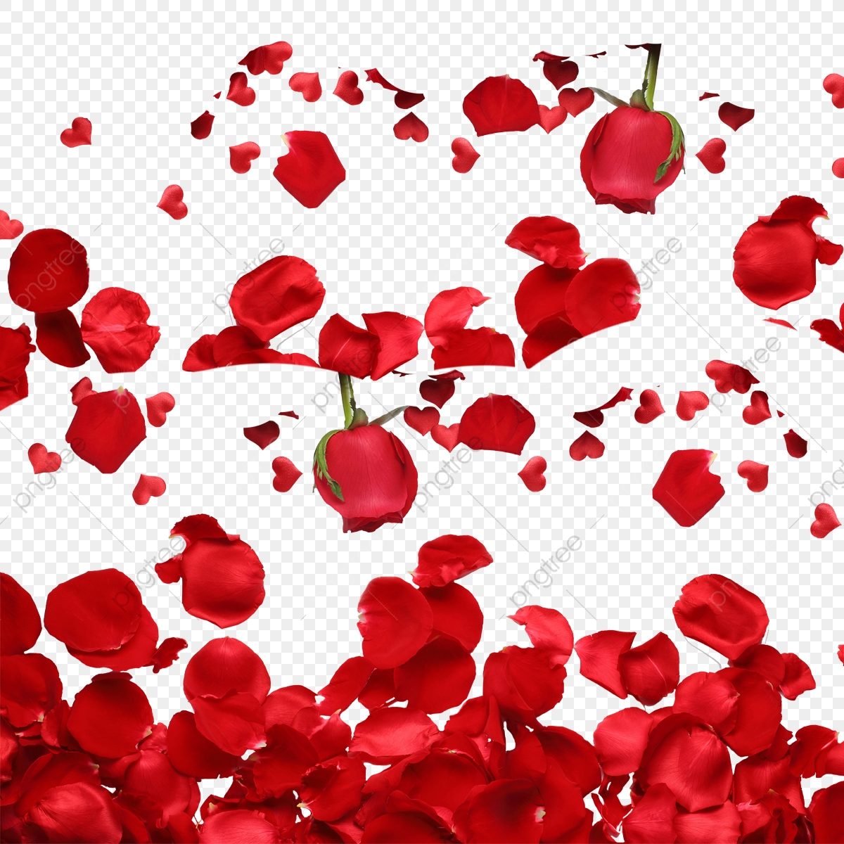 Red Rose Petals, Rose, Petal, Roses PNG Transparent Clipart.