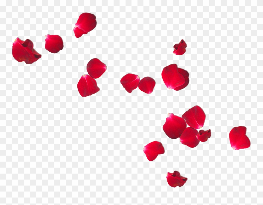 Free Photo Rose Petals Romantic Romance Ring Clipart.