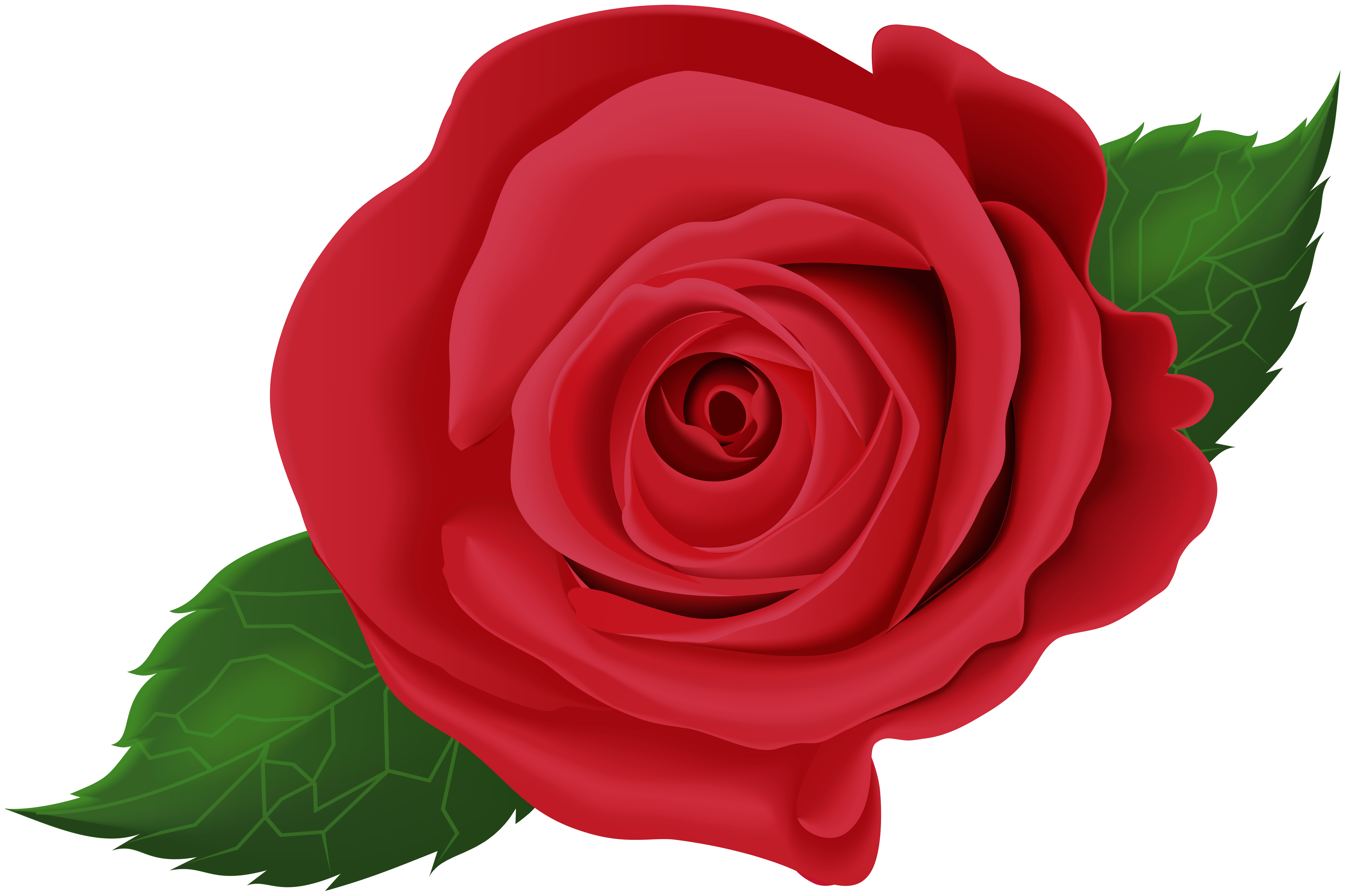 Red Rose with Leaves PNG Clip Art Image.