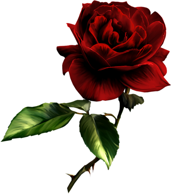 Free Roses Images Free, Download Free Clip Art, Free Clip.
