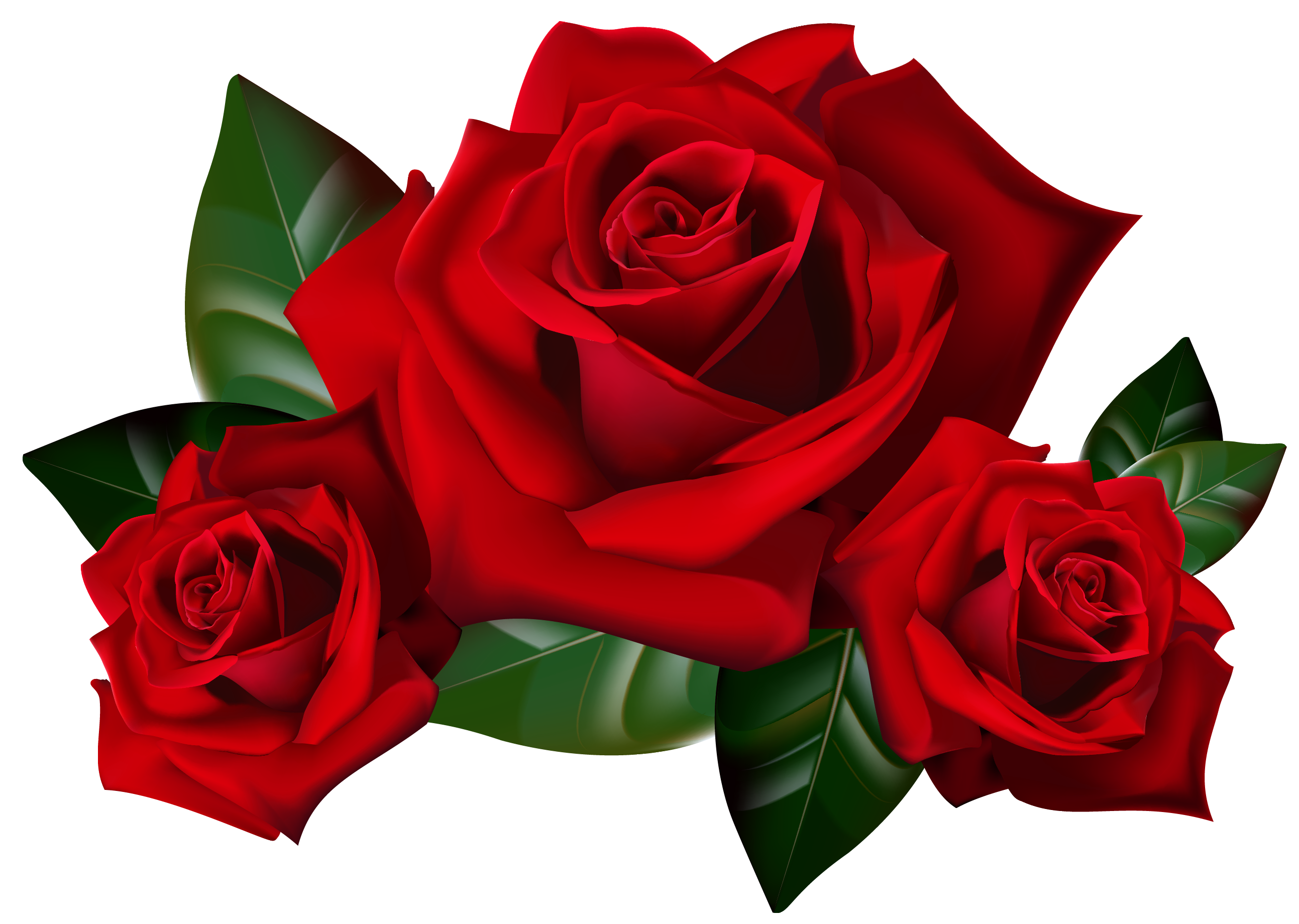 Red Roses PNG Clipart Picture.
