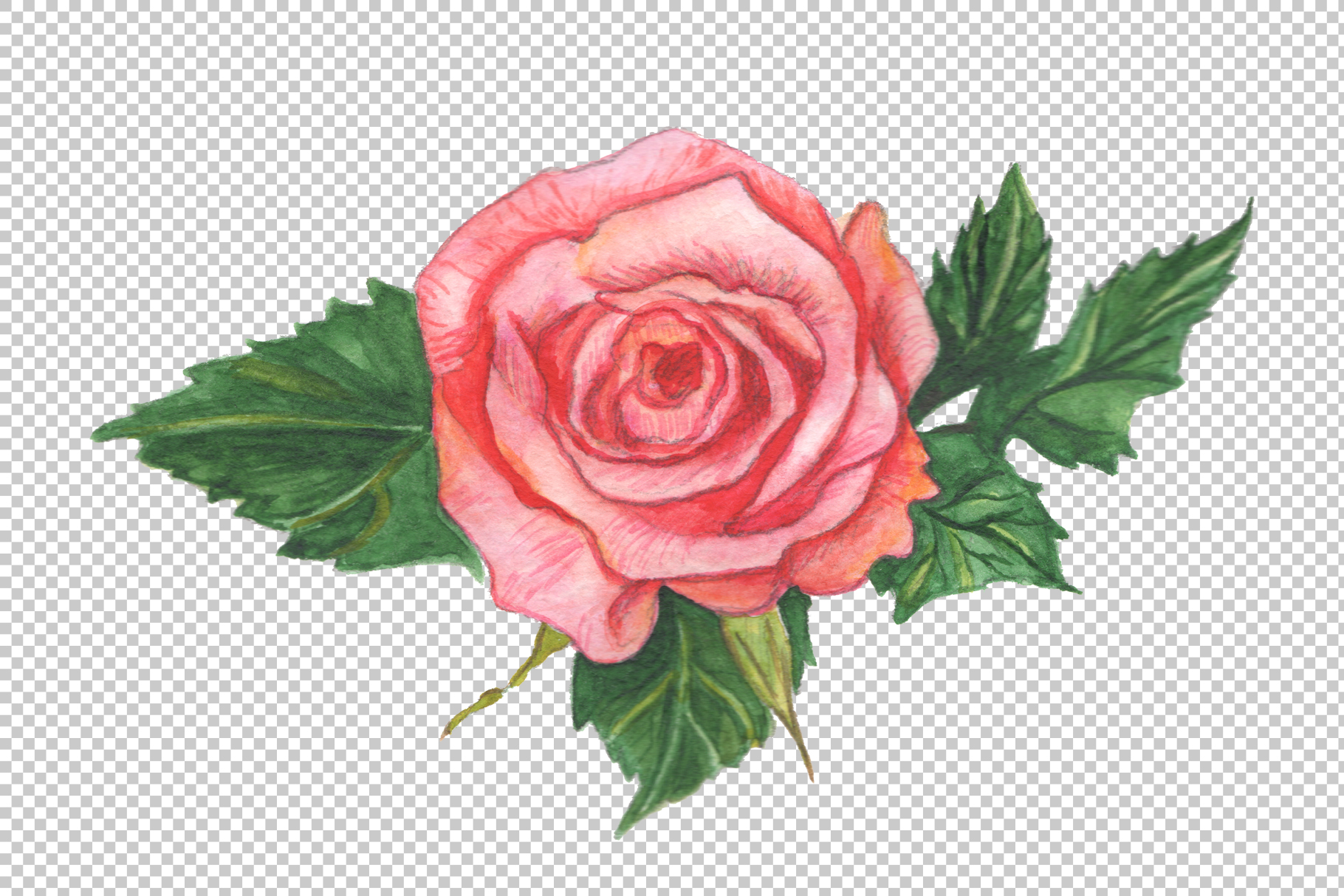 Two red roses PNG watercolor set.