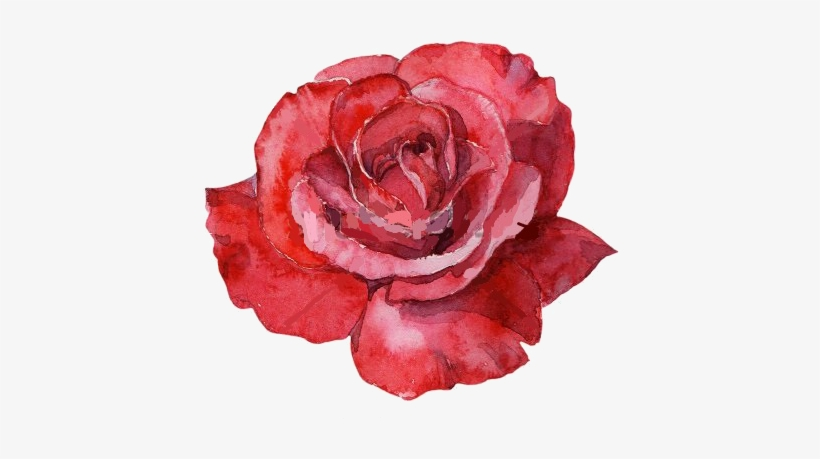 Red Rose Watercolor.