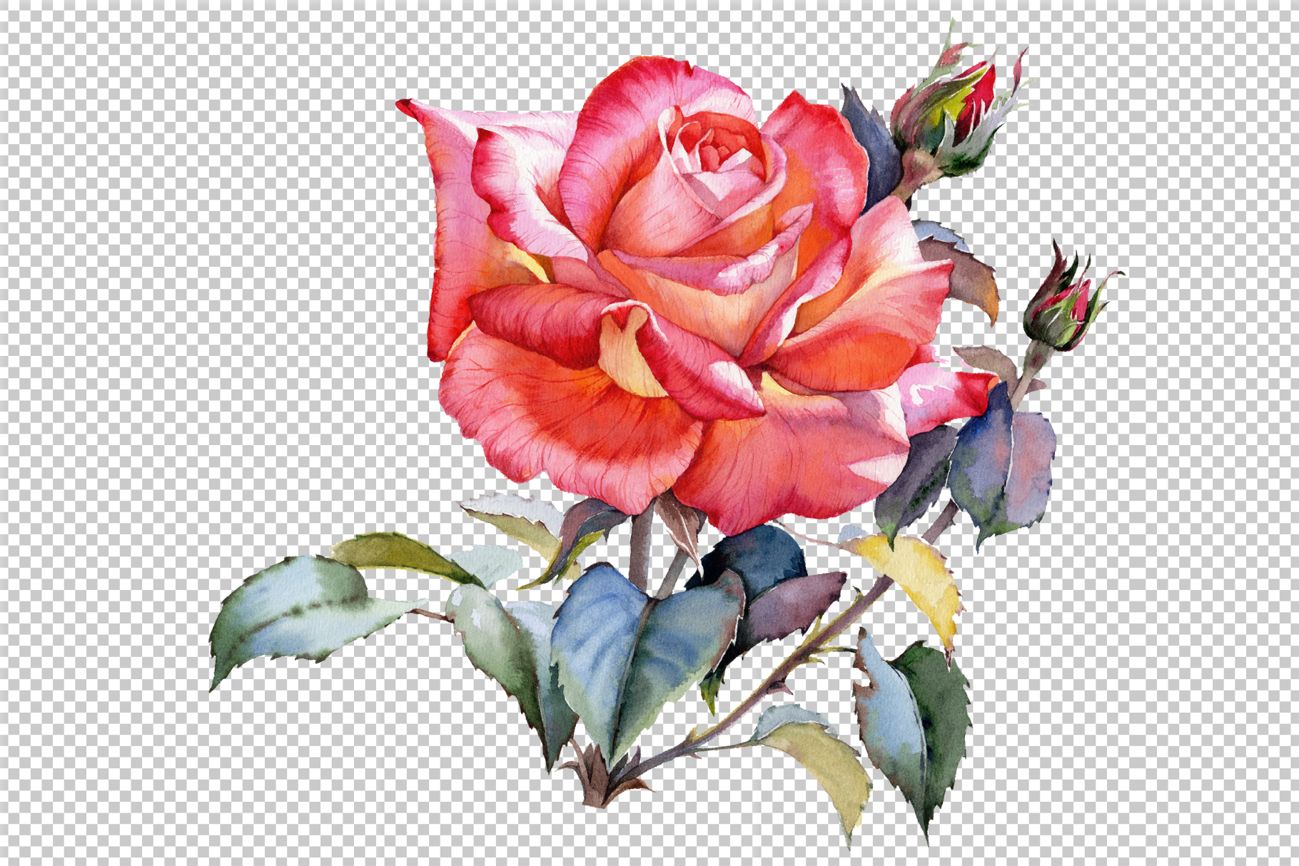 Red Rose realistic PNG watercolor set.