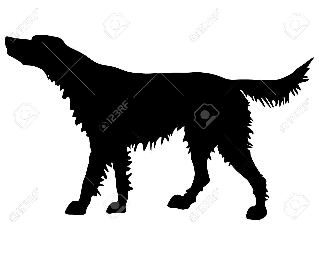 The Black Silhouette Of An Irish Red Setter Royalty Free Cliparts.