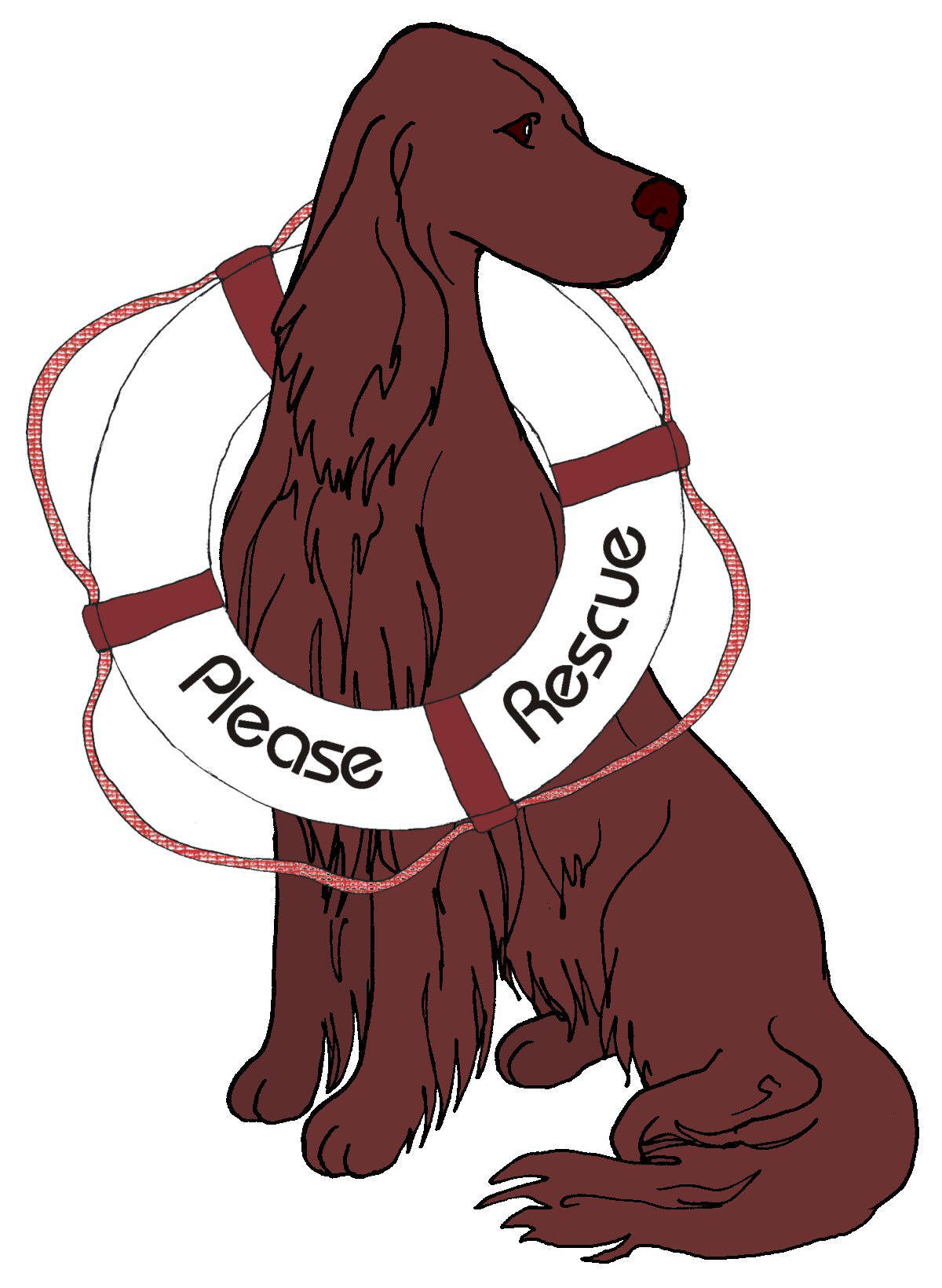 Dog Rescue Irish Setter.