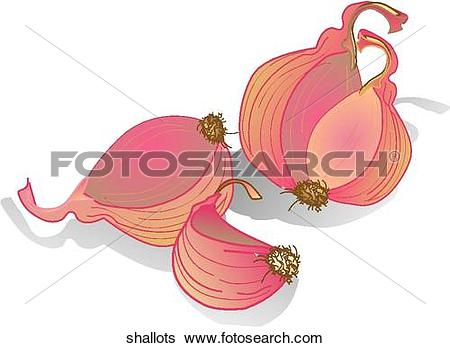 Stock Illustration of Shallots shallots.