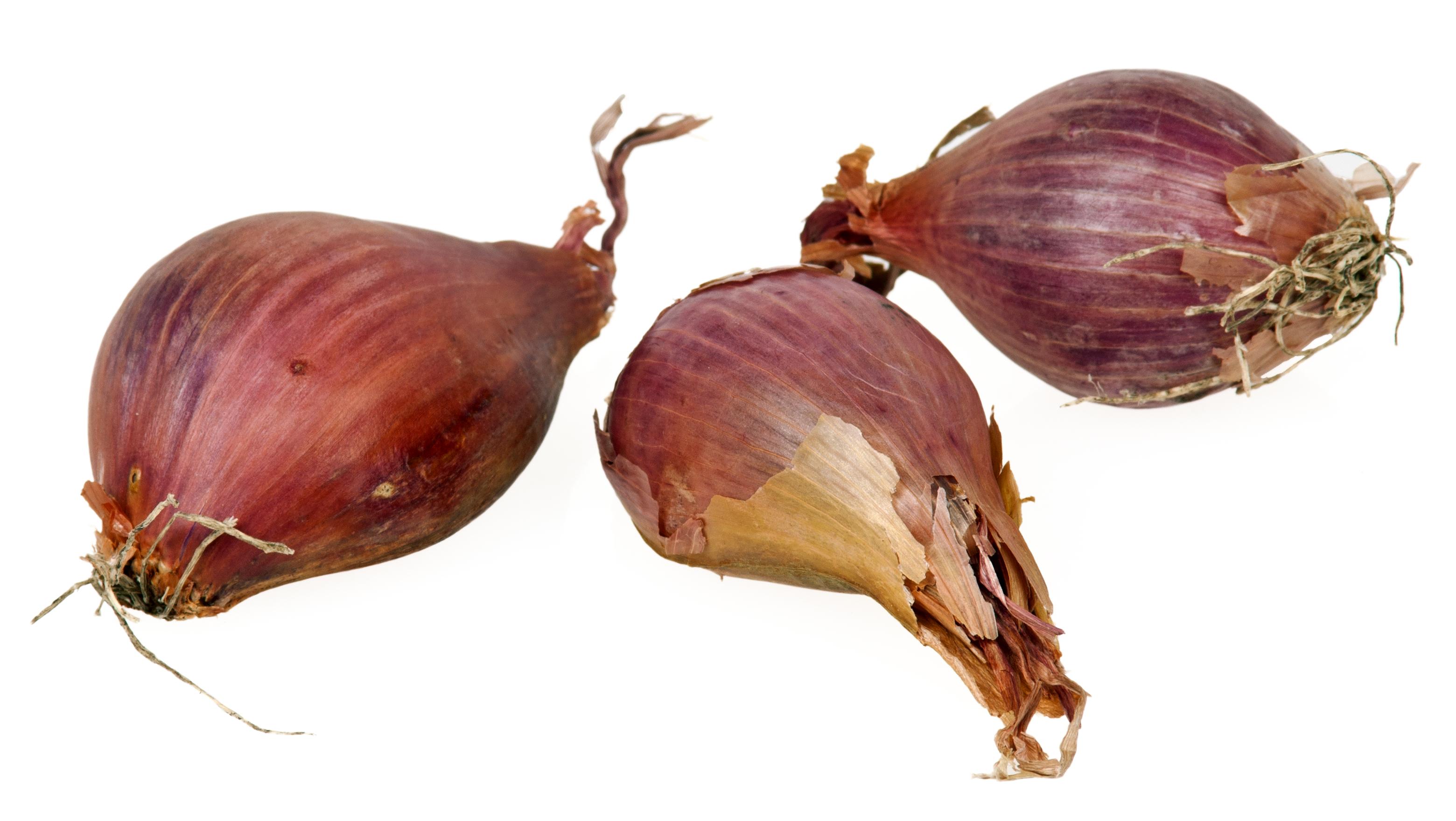 Shallot Onion.