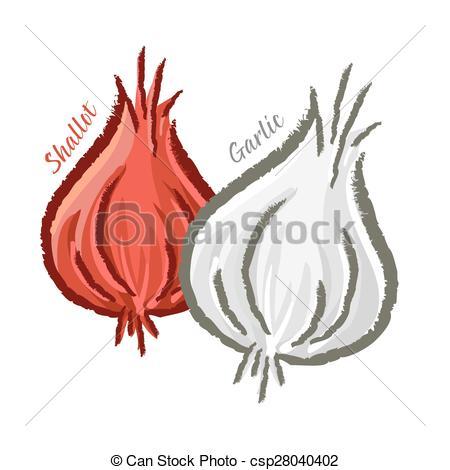 Vector Clipart of Shallots and Garlic.