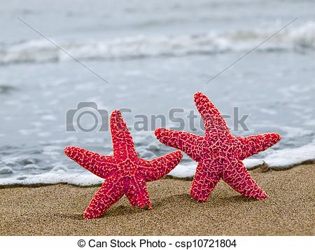 Stock Photography of Two Red Starfish on the Shoreline with Blue.