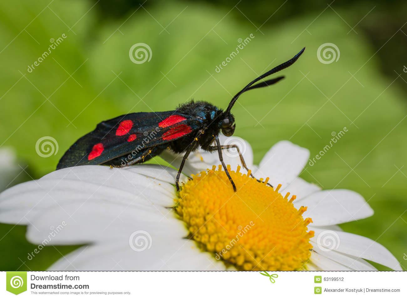 Butterfly Six.