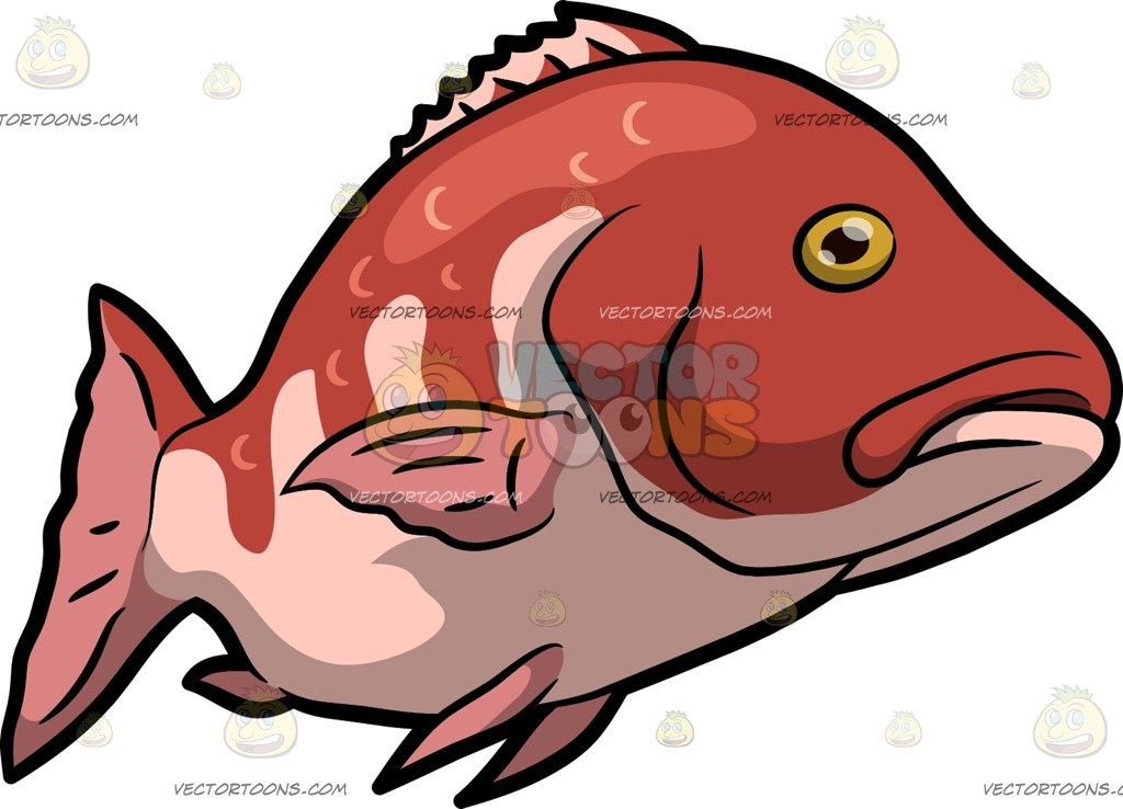 A red snapper fish swims under the sea » Clipart Portal.