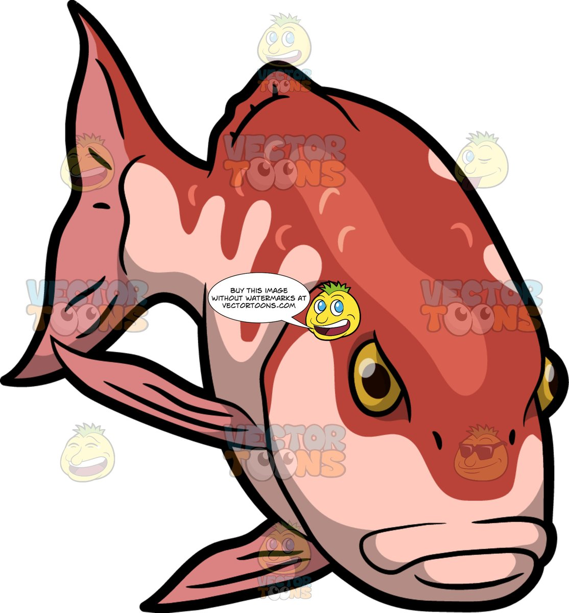 An Angry Red Snapper Fish.