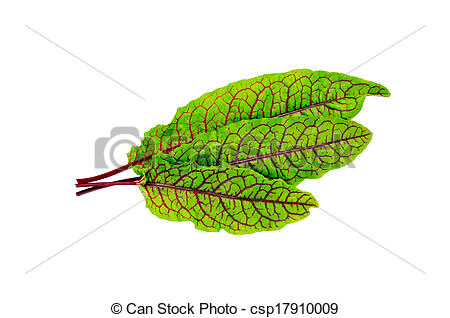 Stock Photography of Sorrel green with red veins.