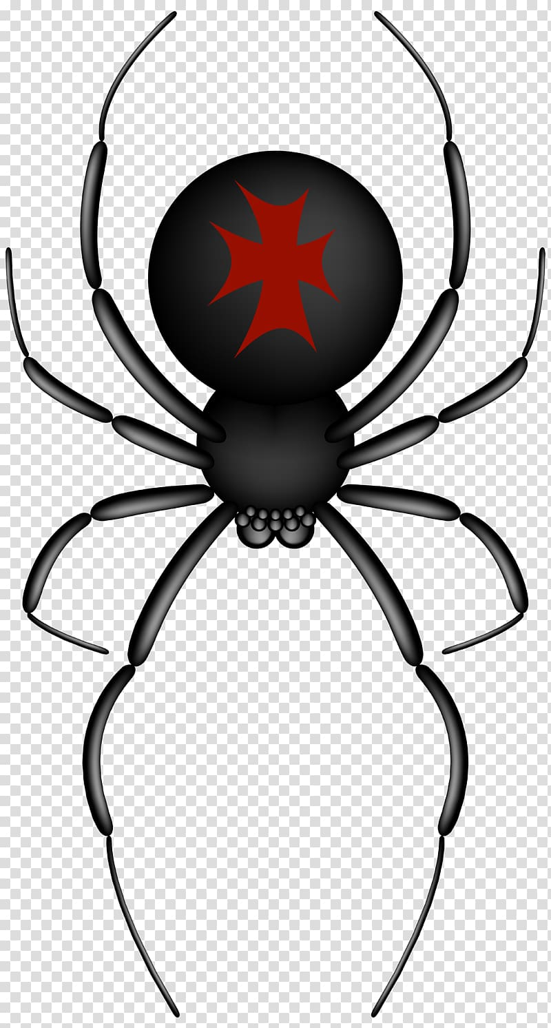 Black and red spider illustration, Spider.