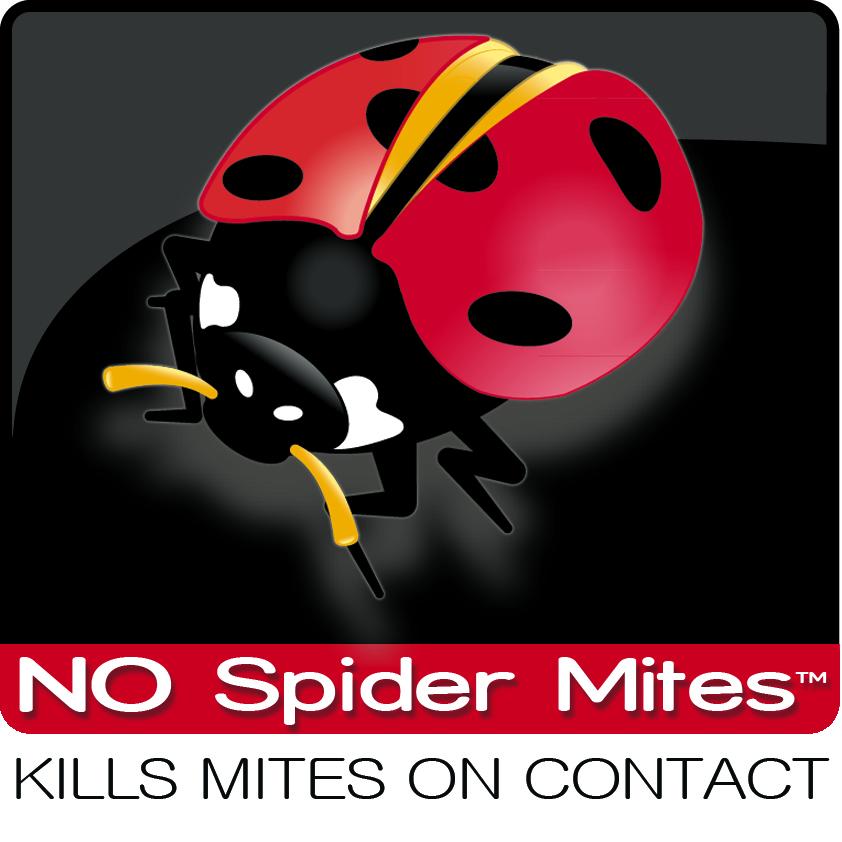 Spider Mites Infestation.