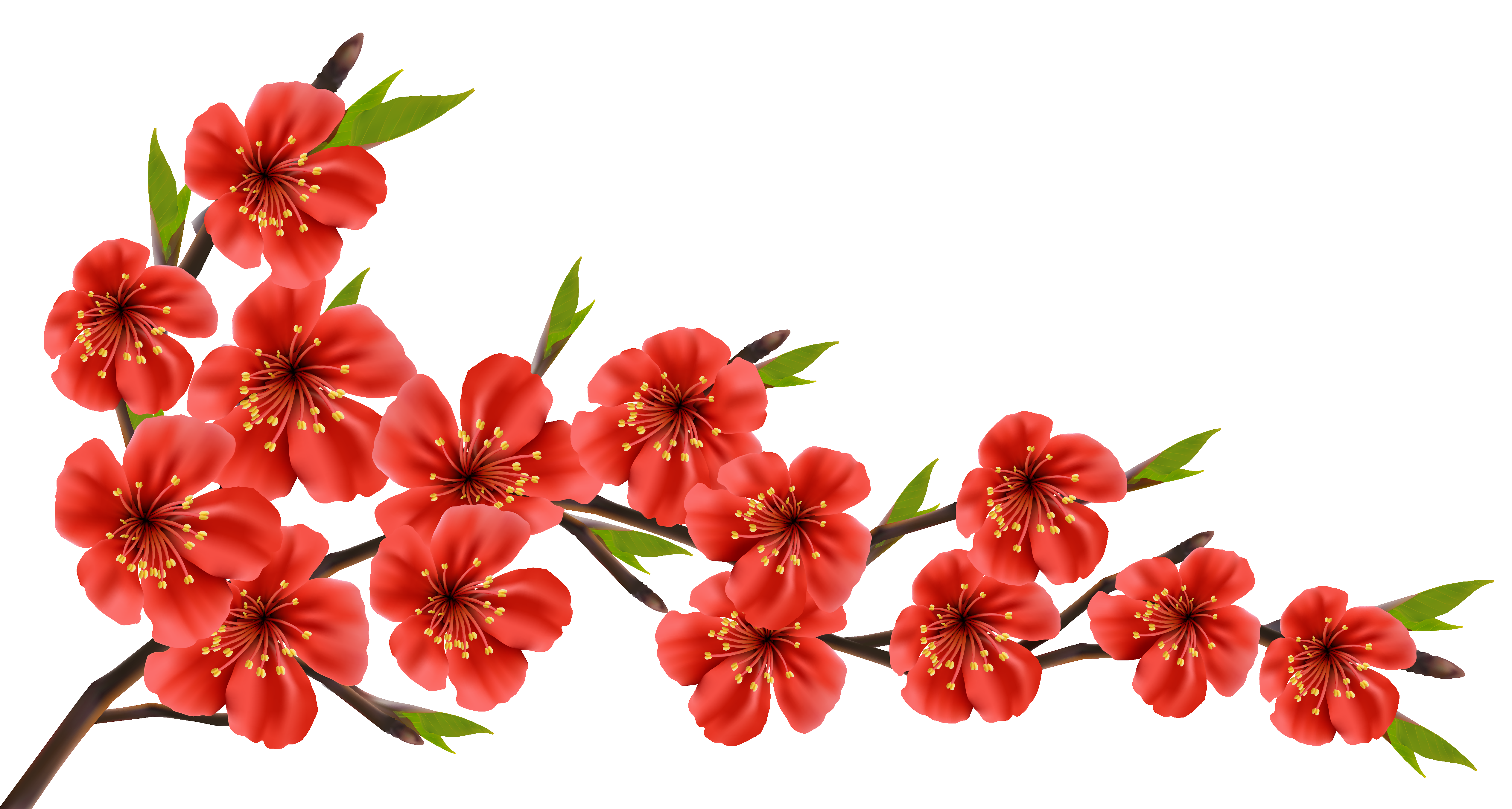 Red Spring Branch PNG Clipart Image.