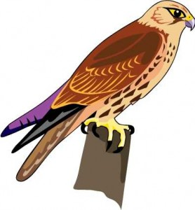 Red Hawk Clipart.