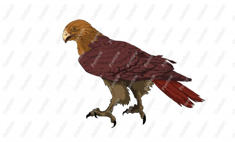Red Tailed Hawk Character Clip Art.