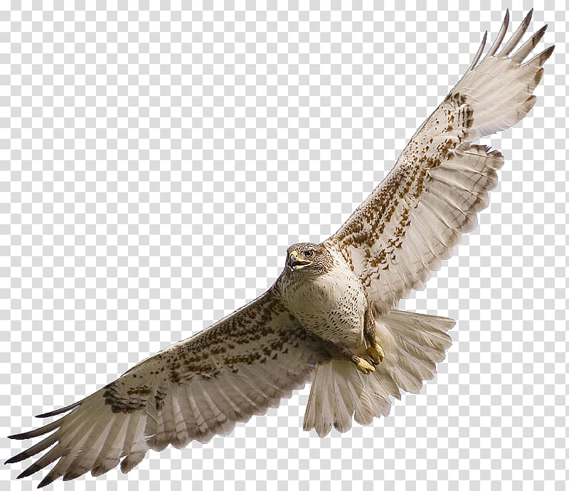 Flying white and brown owl, Bird Owl Red.