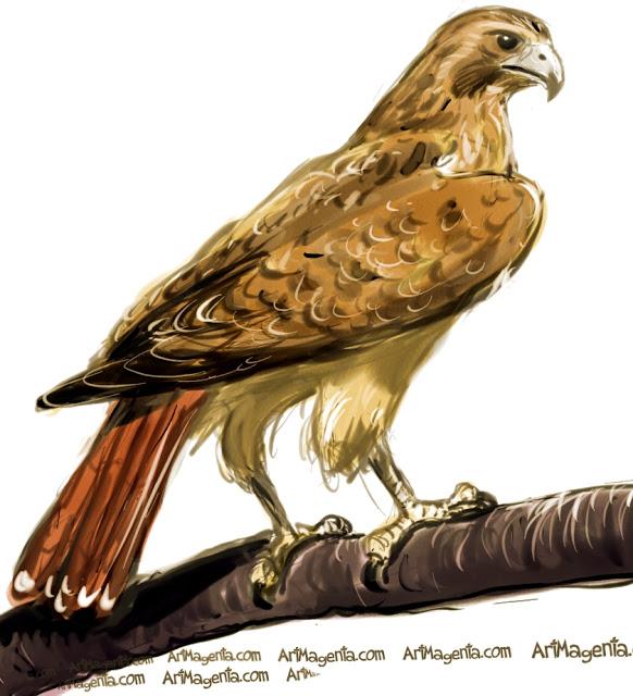 Falcon clipart red tailed hawk pencil and inlor falcon 2.