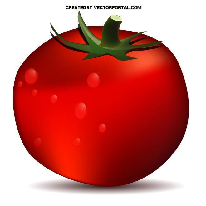Red Tomato Clip Art Free Vector.