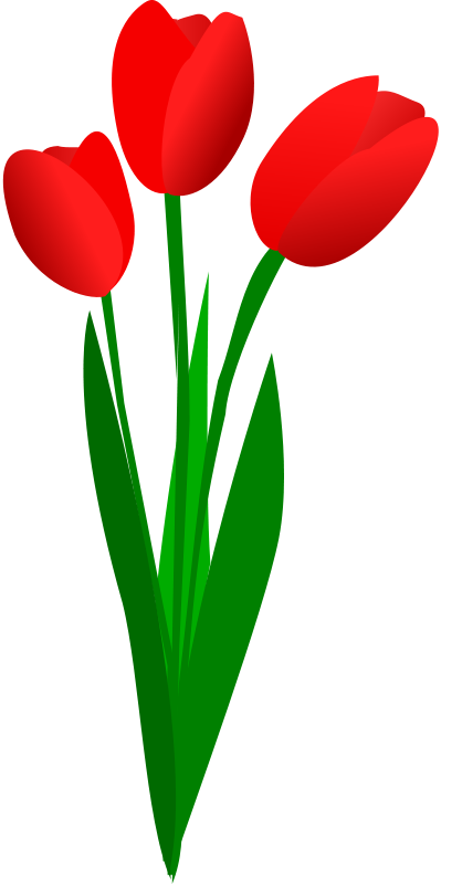Red Tulips Clipart.