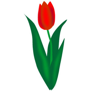 Red tulip clipart.