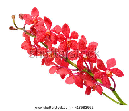 Vanda Red Stock Photos, Royalty.
