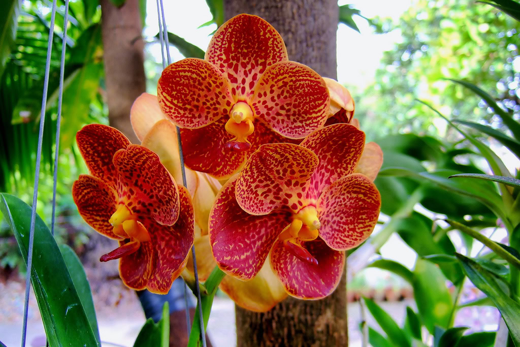 Best orchids in the world.