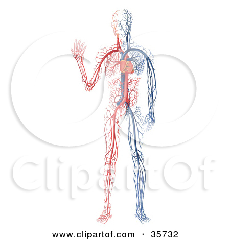 Clipart Illustration of a Heart Pumping Blue And Red Blood.