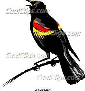 Redwing blackbird Clip Art.