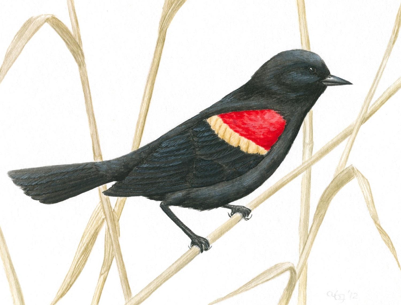 1000+ images about Gouache Illustration Nature on Pinterest.
