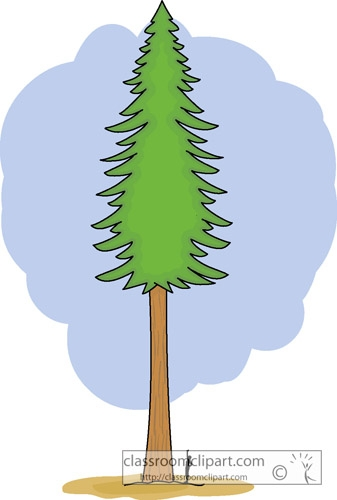 Redwood Tree Clipart.