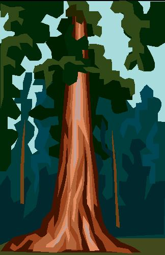 Redwood trees clipart.